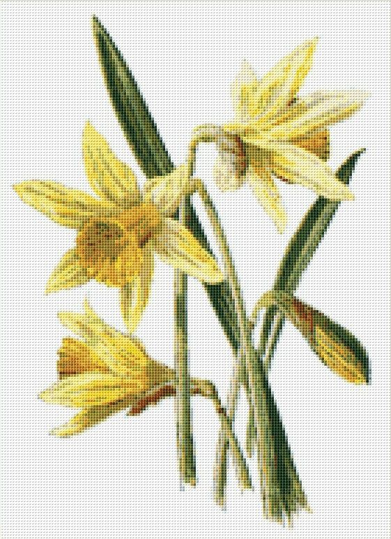 Daffodil Counted Cross Stitch Chart, Instant Digital Download Floral Cross Stitch Pattern, Narcissus Cross Stitch, Embroidery, Needlework