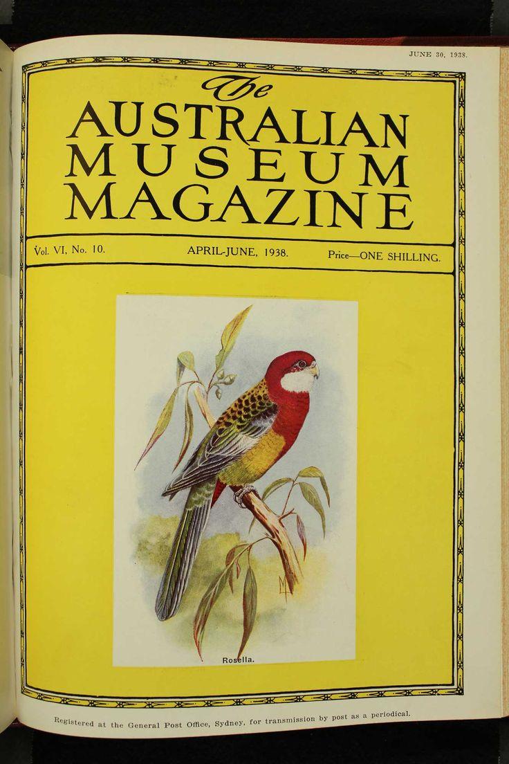 Australian-Museum-Magazine. The Rosella. Illustrator: Lilian Medland. http://australianmuseum.net.au/Australian-Museum-Magazine-1921-1942/