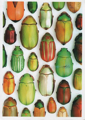 beetles and scarabs and posters about, al