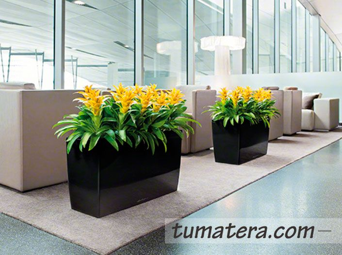 Son la unión perfecta entre estética y funcionalidad. Encuentralas en: http://www.tumatera.co/products/matera-inteligente-11-mi-753043cararo/