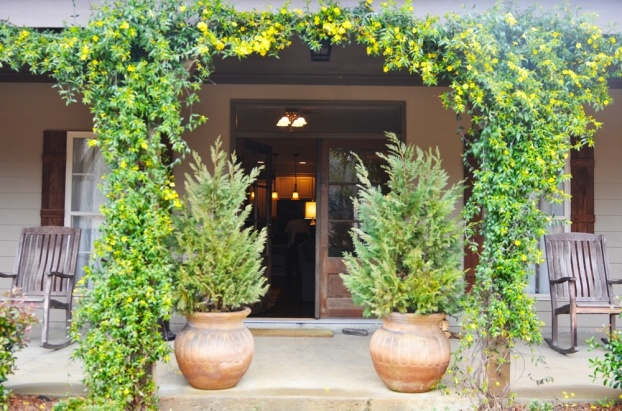 Carolina Jasmine Garden Ideas Pinterest Trips