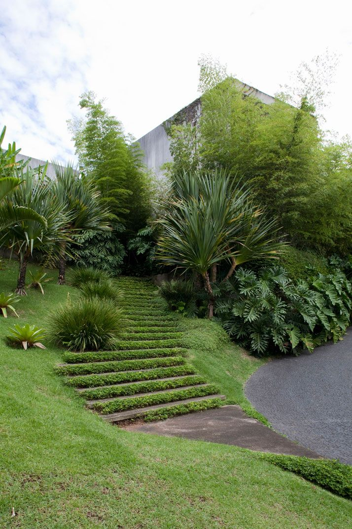 [][][] Stairs carpeted with lush green grass. House of architect Pedro Useche.