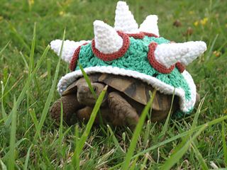 Bowser Costume for a Box Turtle