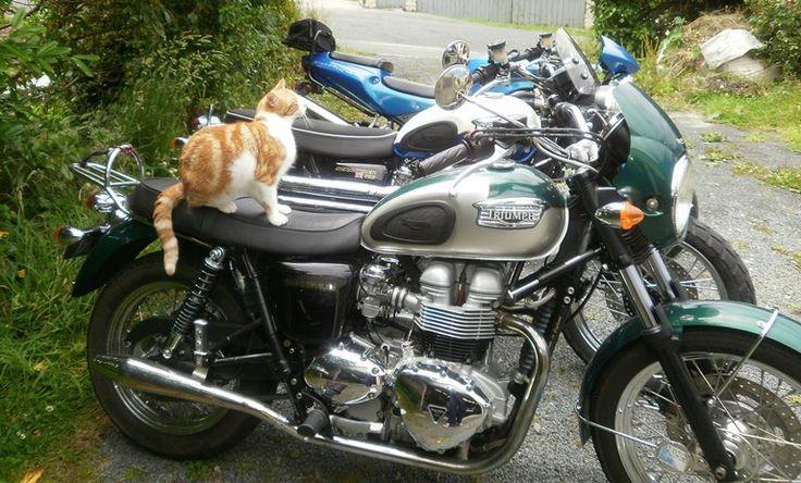 Hector reckons he deserves a lot more attention than the Triumph Bonneville.