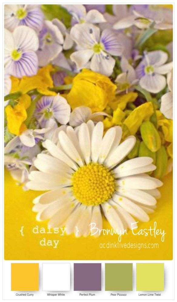 SU Colour Combinations for Daisy Delight
