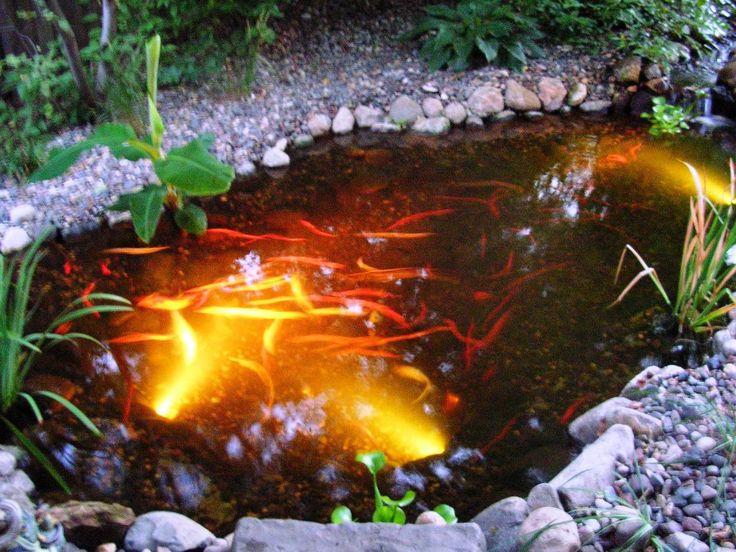 17 Best Ideas About Pond Lights On Pinterest Fish Ponds