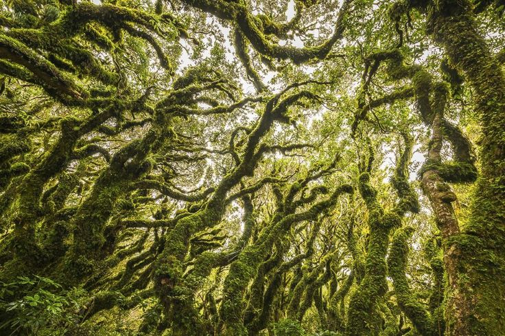 The name speaks for itself: the creepy Goblin Forest is truly unique and won't be anything like you've seen before. Find the forest by entering Tararua Forest Park, then make your way to the mid-slope to treeline forests on Mount Taranaki, about 600-900m up.