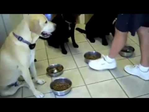 Dogs saying their prayers before a meal