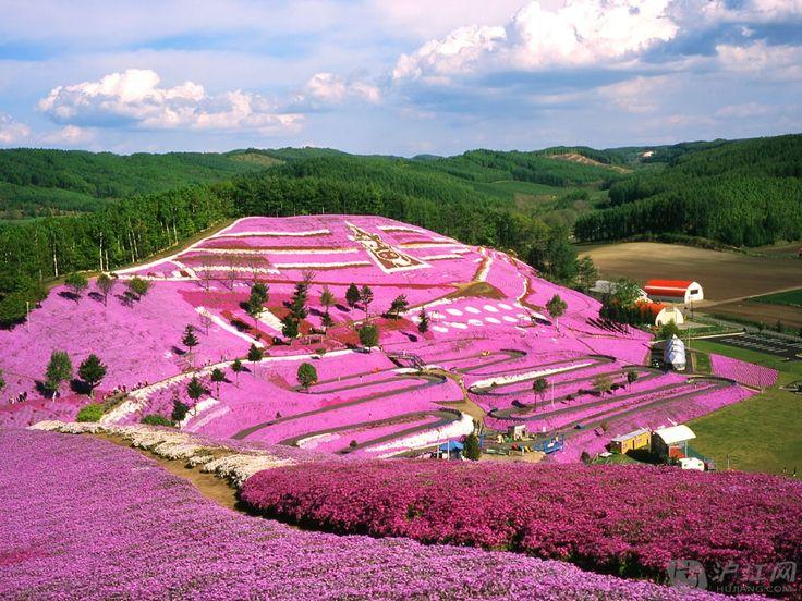 Spring Flowers on Hill Side Hokkaido