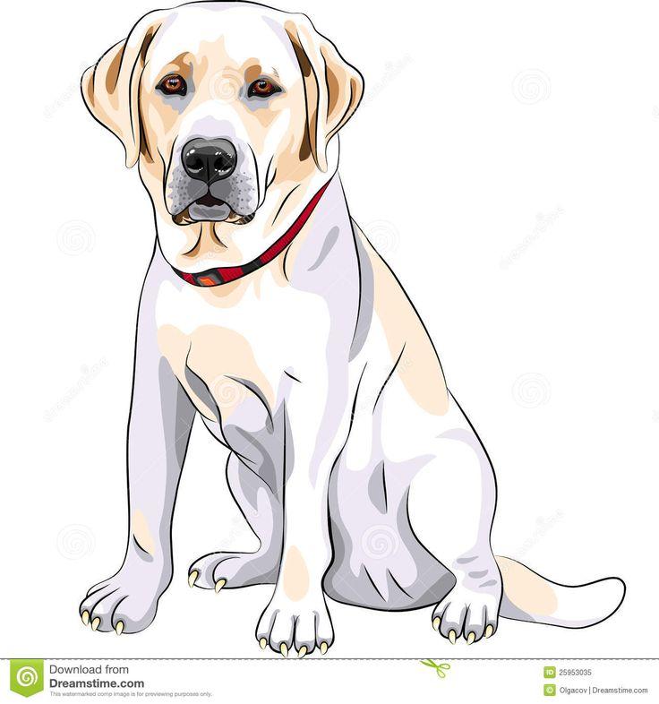 yellow labrador retriever cartoon - Google Search