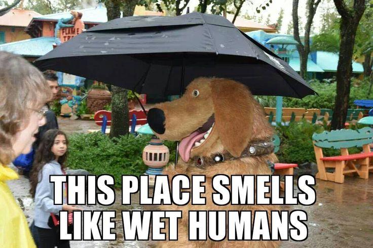 Dug the Dog - on wet humans.   [For more Disney facts, trivia, secrets, stories, fan art, etc. Please visit my Disney blog:  http://grown-up-disney-kid.tumblr.com/ ]