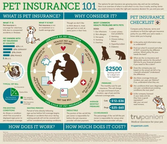 Pet Insurance Here S What Every Dog Owner Should Know Pet