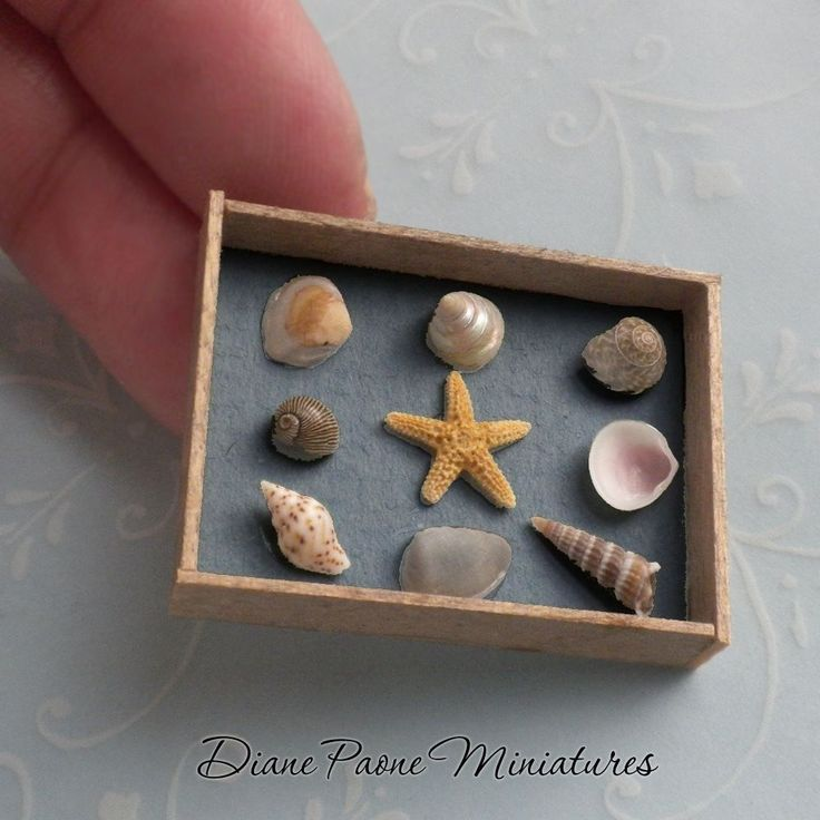 Shell Specimens in Weathered Crate - Nautical Beach Shells Dollhouse Miniature