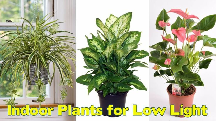 Best 25+ Low Light Plants Ideas On Pinterest