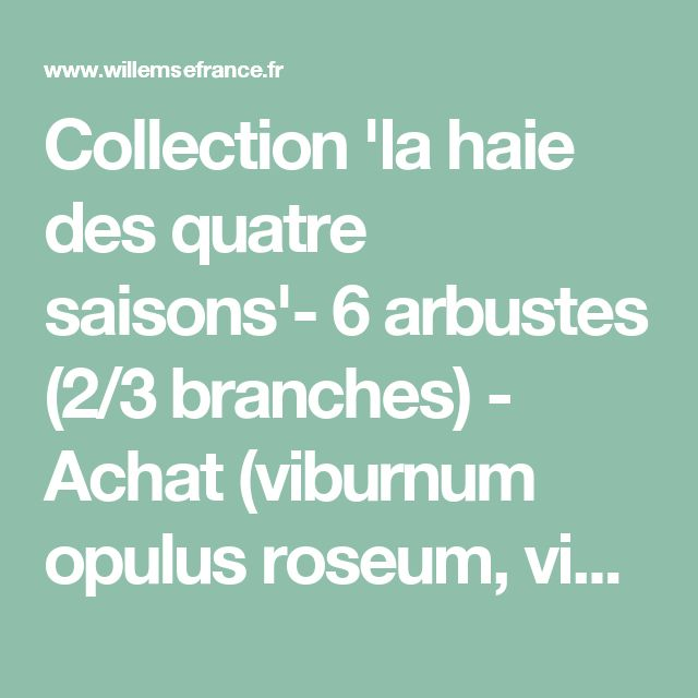 Collection 'la haie des quatre saisons'- 6 arbustes (2/3 branches) - Achat (viburnum opulus roseum, viburnum bodnantense 'dawn', weigelia 'bristol ruby', p) - Willemse