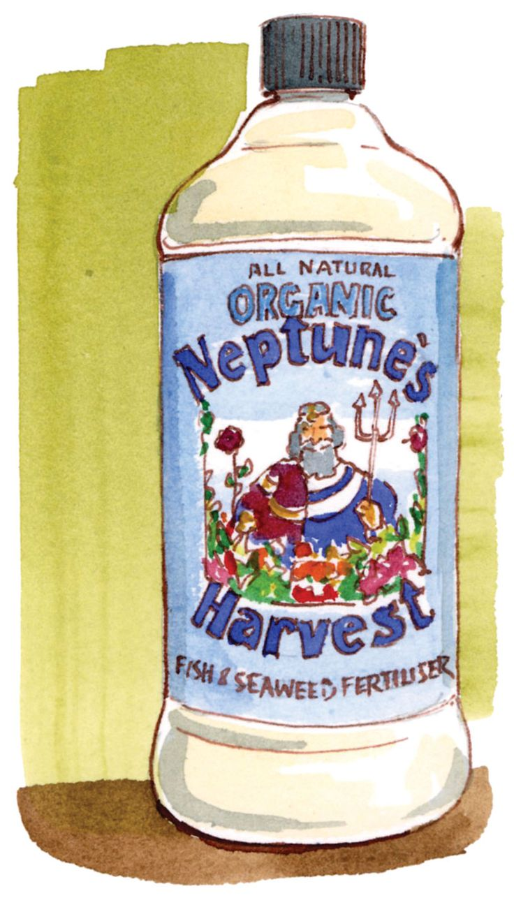 Supplement your seedlings with liquid fertilizer to give them the best start.  Contributing editor Barbara Pleasant provides everything you know to start seeds indoors and give your food garden a great head start this season. From MOTHER EARTH NEWS magazine.