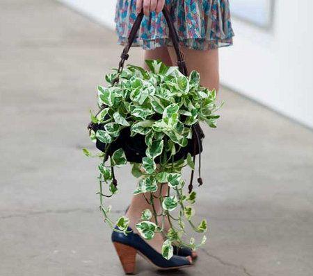 bag o plant