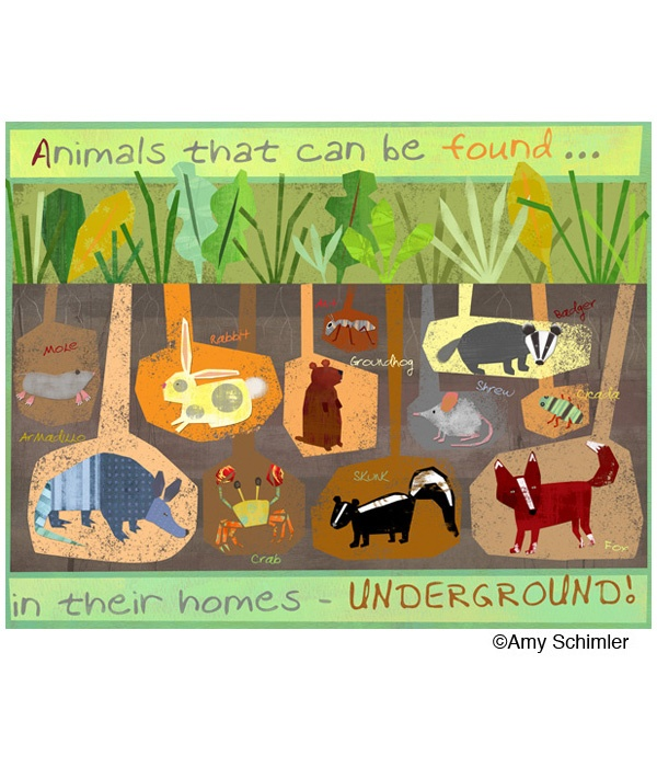 Underground Animals | Picturebook