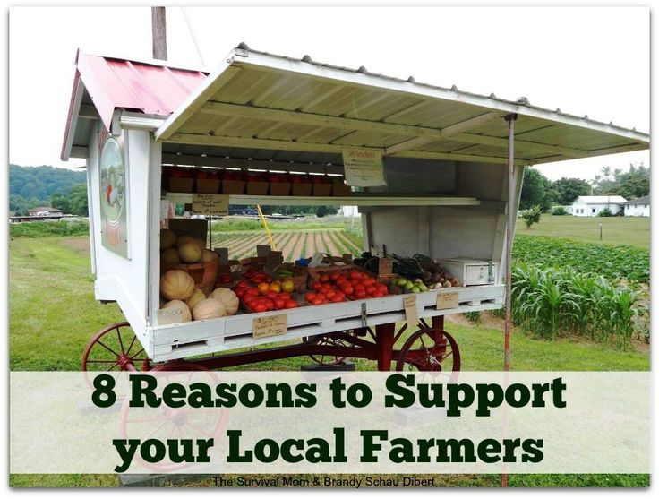 eating locally essay 5 things you should know about organic food  farmers' markets carry reasonably priced locally grown  and even the sensation in your mouth as you're eating.