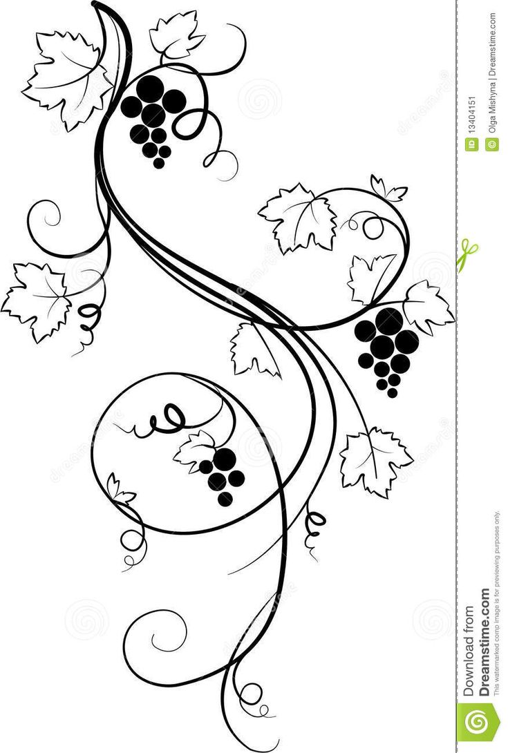 Grape Vines Drawing  Google Search