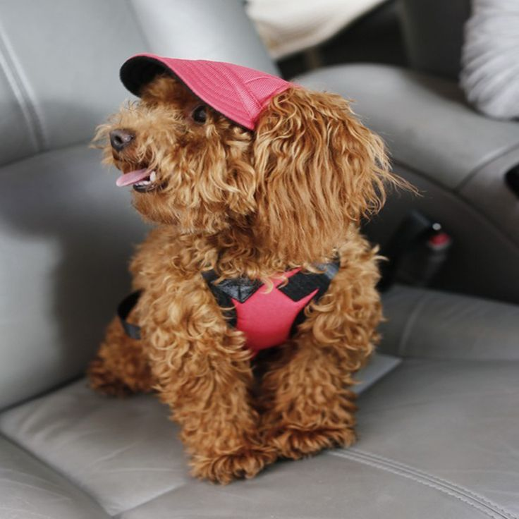 Dog Sun Hat,Jeans Adjustable Pet Dog Sport Baseball Outdoor Sun Protection Hat/Cap //Price: $0.00 & FREE Shipping //     #persiancat #persian_cat #cat #cats #catlover #catsofinstagram #catstagram #instacat #cutecat