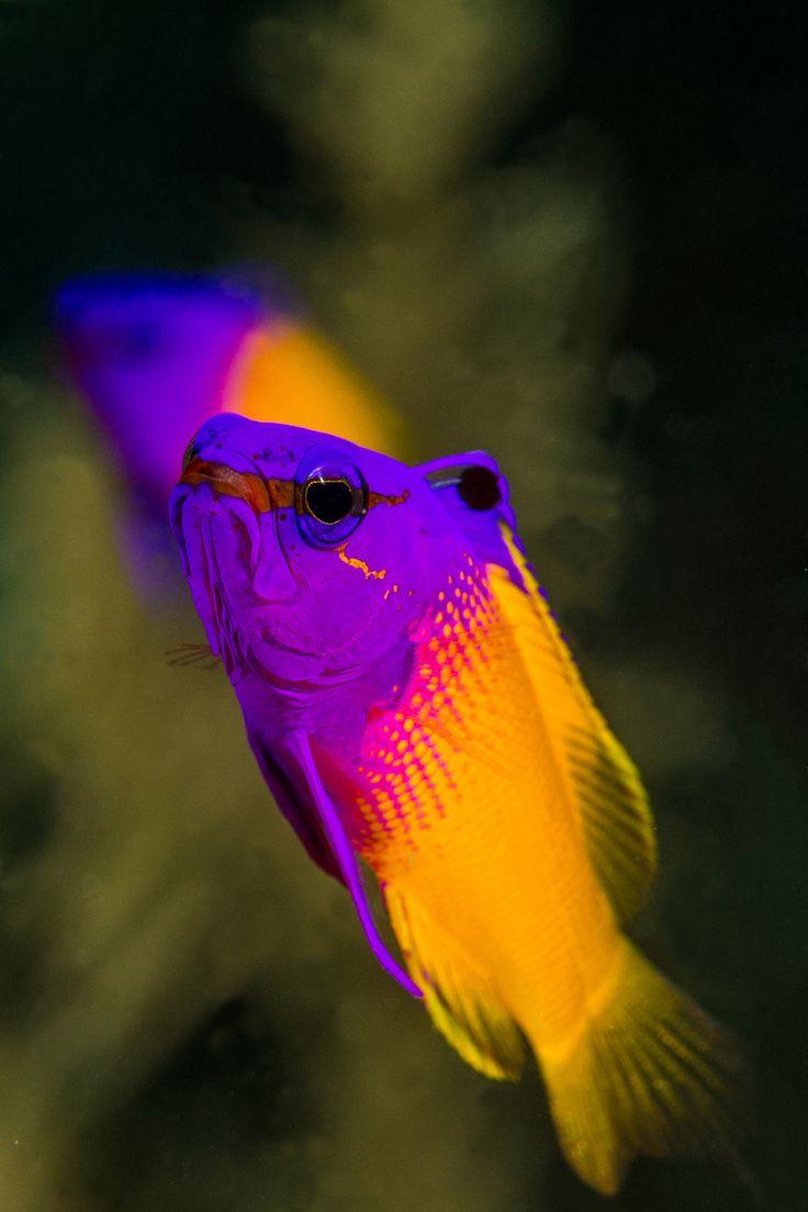 54 best fish basslets images on pinterest fishing marine