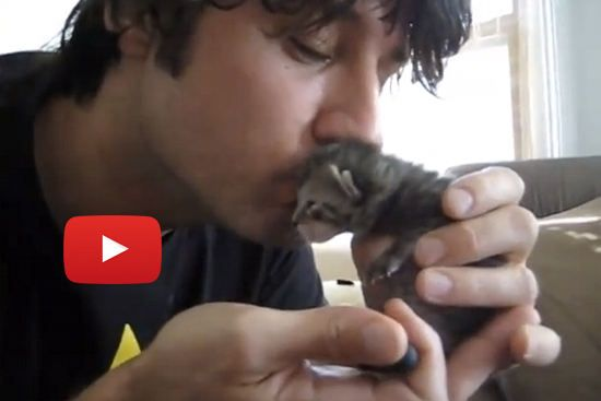 Miracle Kitten Rescue