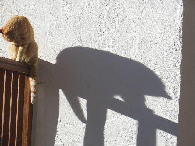 Ronny e l'ombra