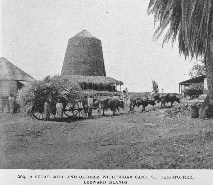 A sugar mill and ox-team with sugar cane, St. Kitts