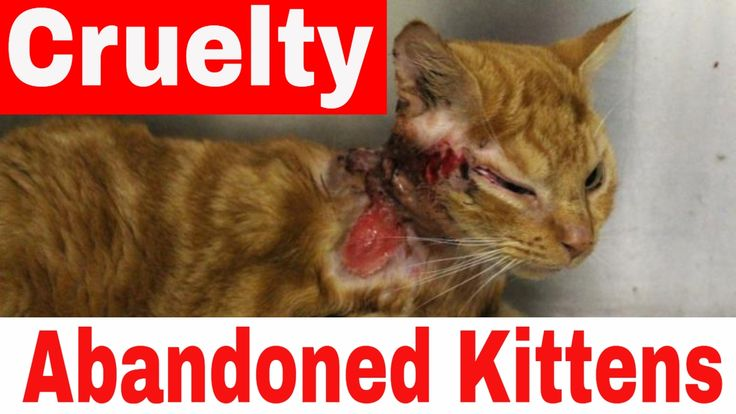 Abandoned Kitten Cruelty - Homeless Cats - Rescue Cats From Death