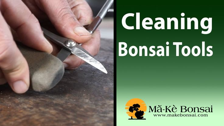 86) Basic Bonsai Tools Care - Bonsai Trees for Beginners Series