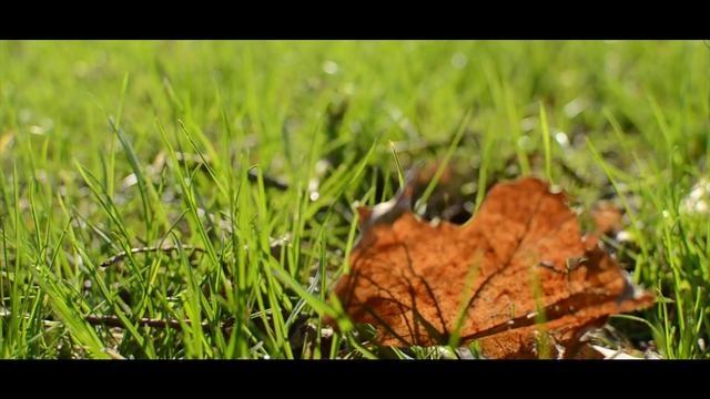 Spring . Music: Lee Ji Soo - Love Poem