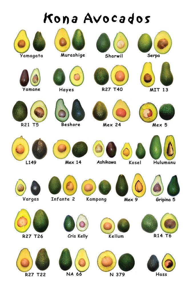 Types of avocados