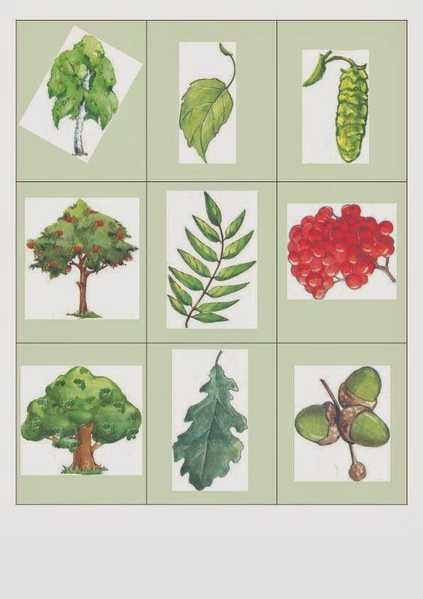 Деревья и плоды картинки и названия для детского сада