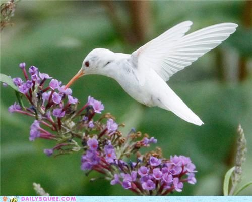 Fifteen-year-old photographer Marlin Shank was fortunate enough to capture several images of a rare albino ruby-throated hummingbird while in a park in Staunton, VA.