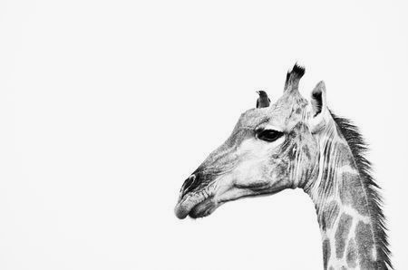 By NatGeo Same point of view Photo by Lucy Beveridge -- National Geographic Your Shot