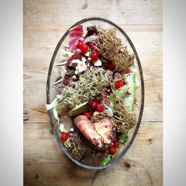 Sallad på fjällkohjärta med rostade hasselnötter, inlagda rönnbär och bryntsmörlav.