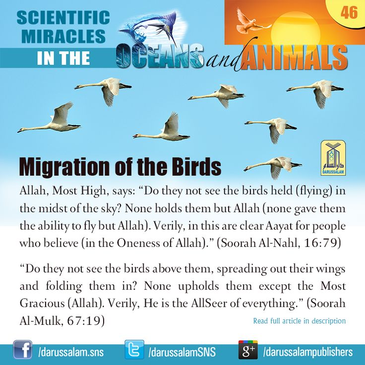 "Migration of the Birds: - from ""Scientific Miracles in the Oceans & Animals"" by Yusuf Al-Hajj Ahmad"