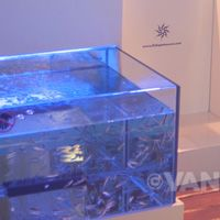 Experiencing a Fish Pedicure at Secrets Silversands Spa by Pevonia | Vancouverscape