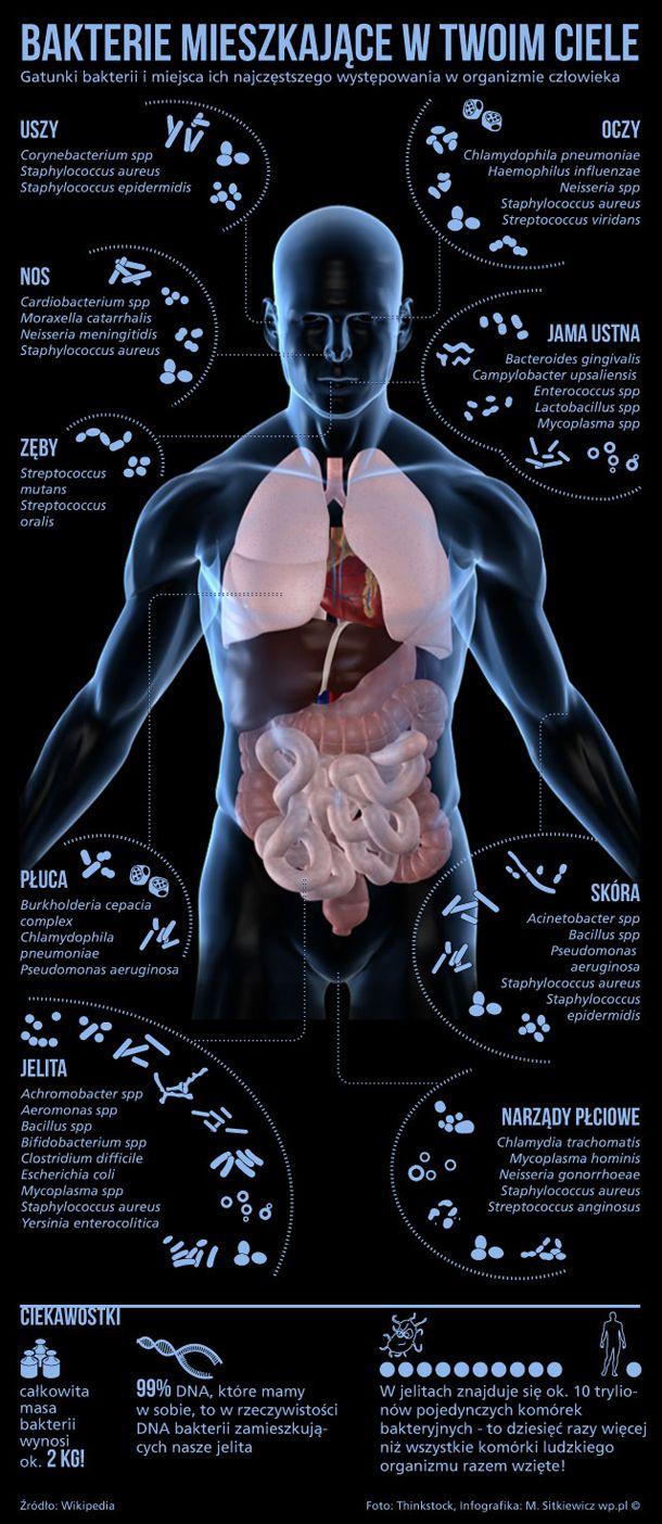 W ciele człowieka żyją tryliony bakterii. Większość z nich jest nam niezbędna do życia, ale niektóre mogą stanowić zagrożenie dla zdrowia.