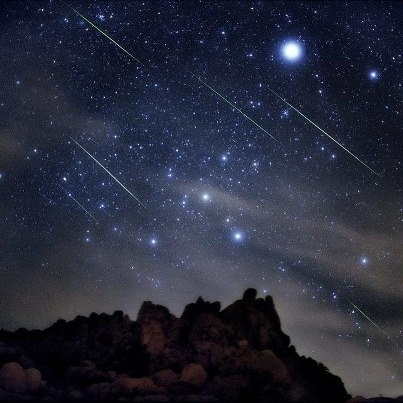 [Leonids meteors rain down through the constellation Canis Major the Big Dog. The shower peaks before dawn November 17. Photo by Tony Hallas]