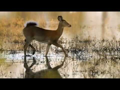 White Tailed Deer Wallpaper is a collection of wallpapers for your smartphone.