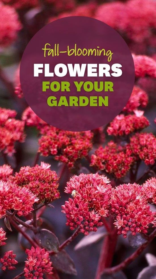 Make the most of the season and plant flowers that will last!