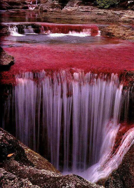 The river of five colors, Caño Cristales, Columbia