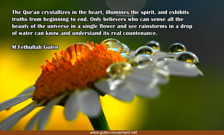 """Pearls of Wisdom by Fethullah Gulen #Quran """"The Qur'an crystallizes in the heart, illumines the spirit, and exhibits truths from beginning to end. Only believers who can sense all the beauty of the universe in a single flower and see rainstorms in a drop of water can know and understand its real countenance."""""""