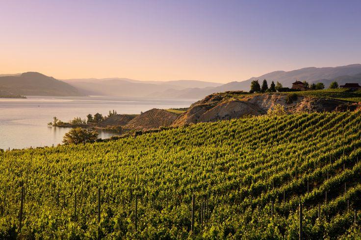 Matt Szymkow  Naramata, BC  Captured amongst the beautiful Narmata vineyards at sundown. The beautiful canvas of the Okanagan was in full display