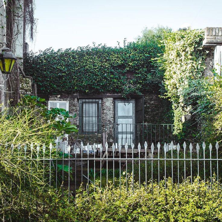 Greenhouse    #vsco #moodygrams #canon #colonia #uruguay #green #leaf #arq #arquitecture