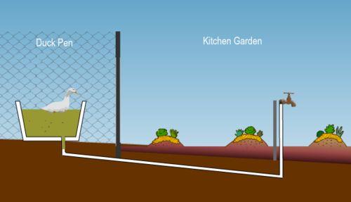 Geoff Lawton's kitchen garden powered by duck water. A neat idea!