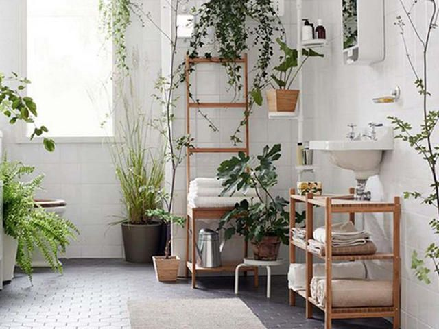 Best 25 plants in bathroom ideas on pinterest bathroom plants best bathroom plants and home - Excellent bathroom plants for fresh interior ...