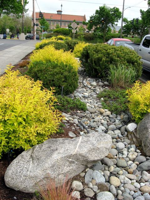 Seattle Garden Ideas: Commercial Landscapes: At PCC, A Dry Stream Runs Through It